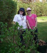 Sarah and Gemma pruning hydrangea copy