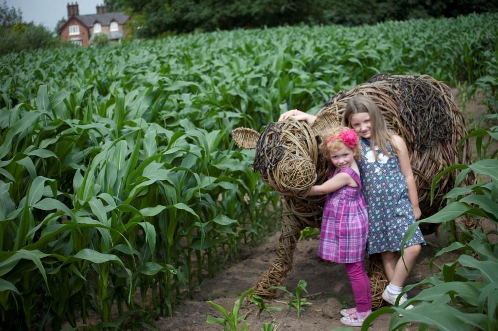 farm maize maze
